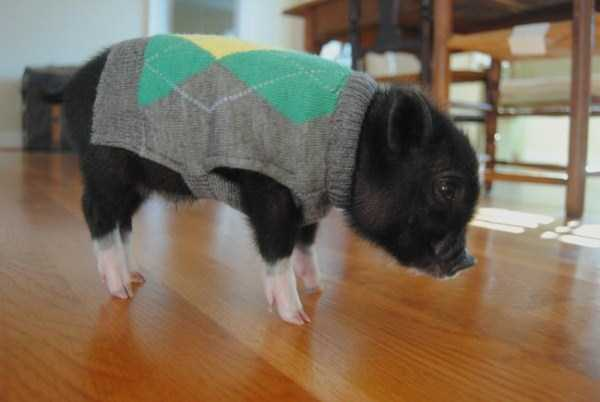 animals in sweaters 33 Adorable Animals Wearing Sweaters (35 photos)