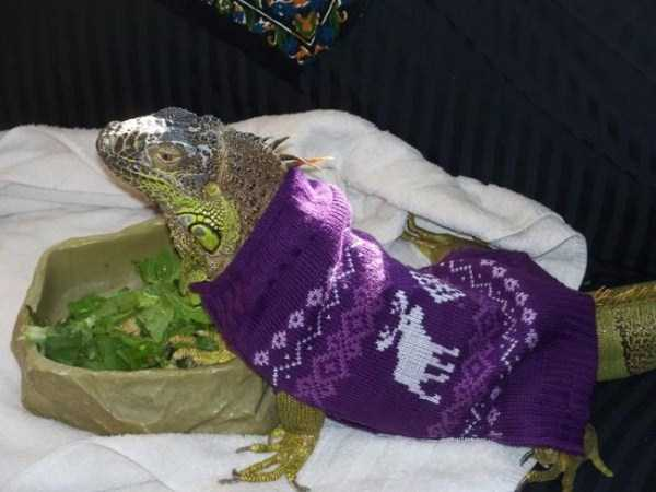 animals in sweaters 4 Adorable Animals Wearing Sweaters (35 photos)