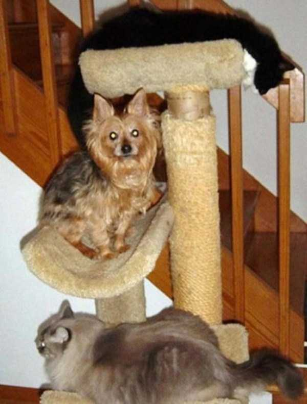 25 Dogs That Behave Like Cats 25 Photos Klyker Com