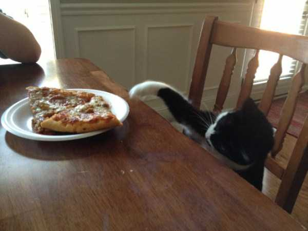 Animals Love Pizza Too Klyker Com