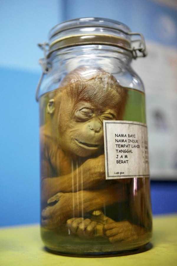 Creepy Things Preserved In Jars Klyker Com