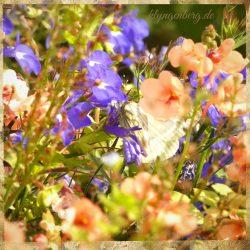 Blumen im Garten Seminarhaus Klyngenberg 2 - Märchenland Mecklenburg