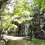 書寫山圓教寺 新緑まつり