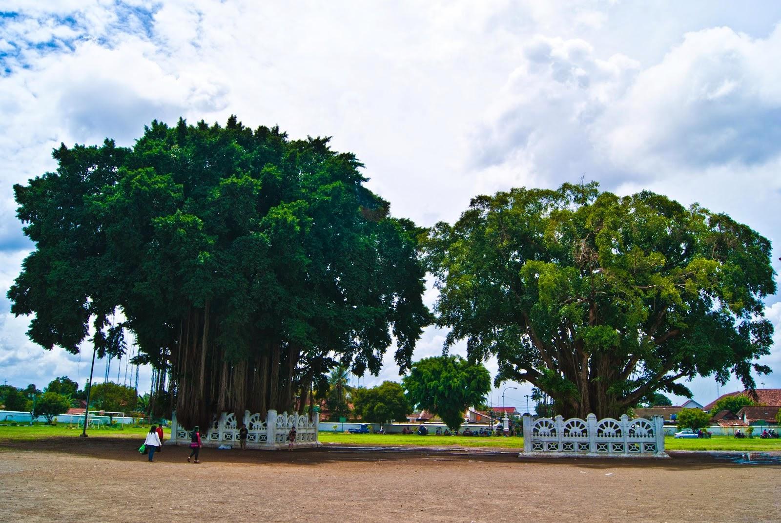 Belajar dari Beringin, Sang Pohon Keramat - Keluarga Mahasiswa Nahdlatul  'Ulama