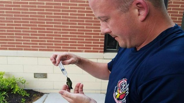 A Maryland Heights firefighter paramedic nursing a hummingbird back to health (Credit: Maryland Heights Fire Protection District / Facebook)