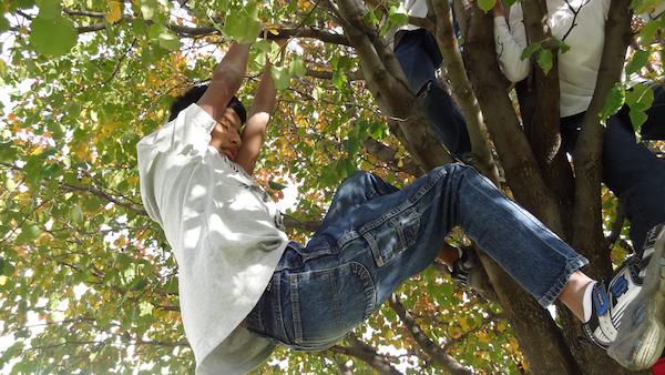 Colin In Tree