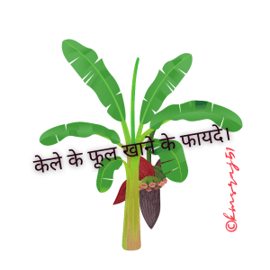 banana-flower-benefits-kmsraj51.png