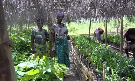 CARITAS Monrovia Donates Cocoa Seeds to Farmers in Bomi County