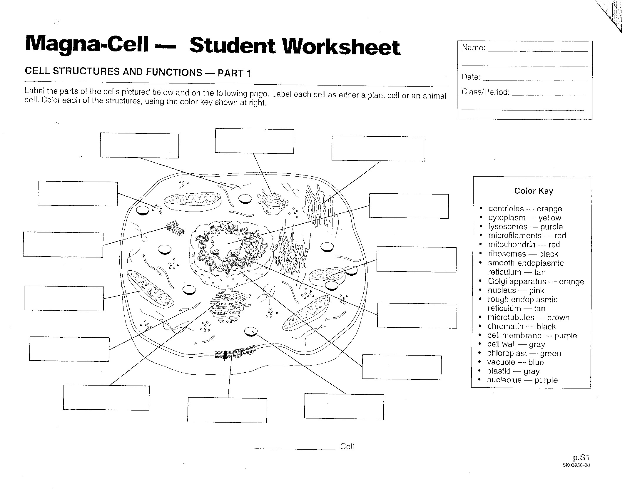 Diagram Of A Plant Cell For 7th Grade