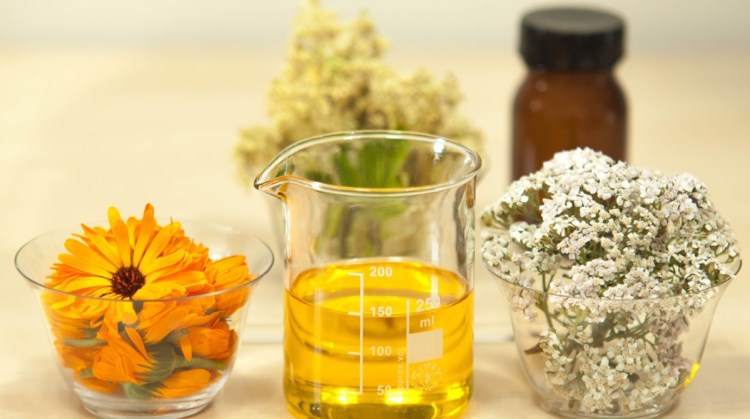 Yarrow is a medicinal plant - in this photo there's a beaker containing an extract from yarrow flowers and calendula flowers (both of which are also pictured)