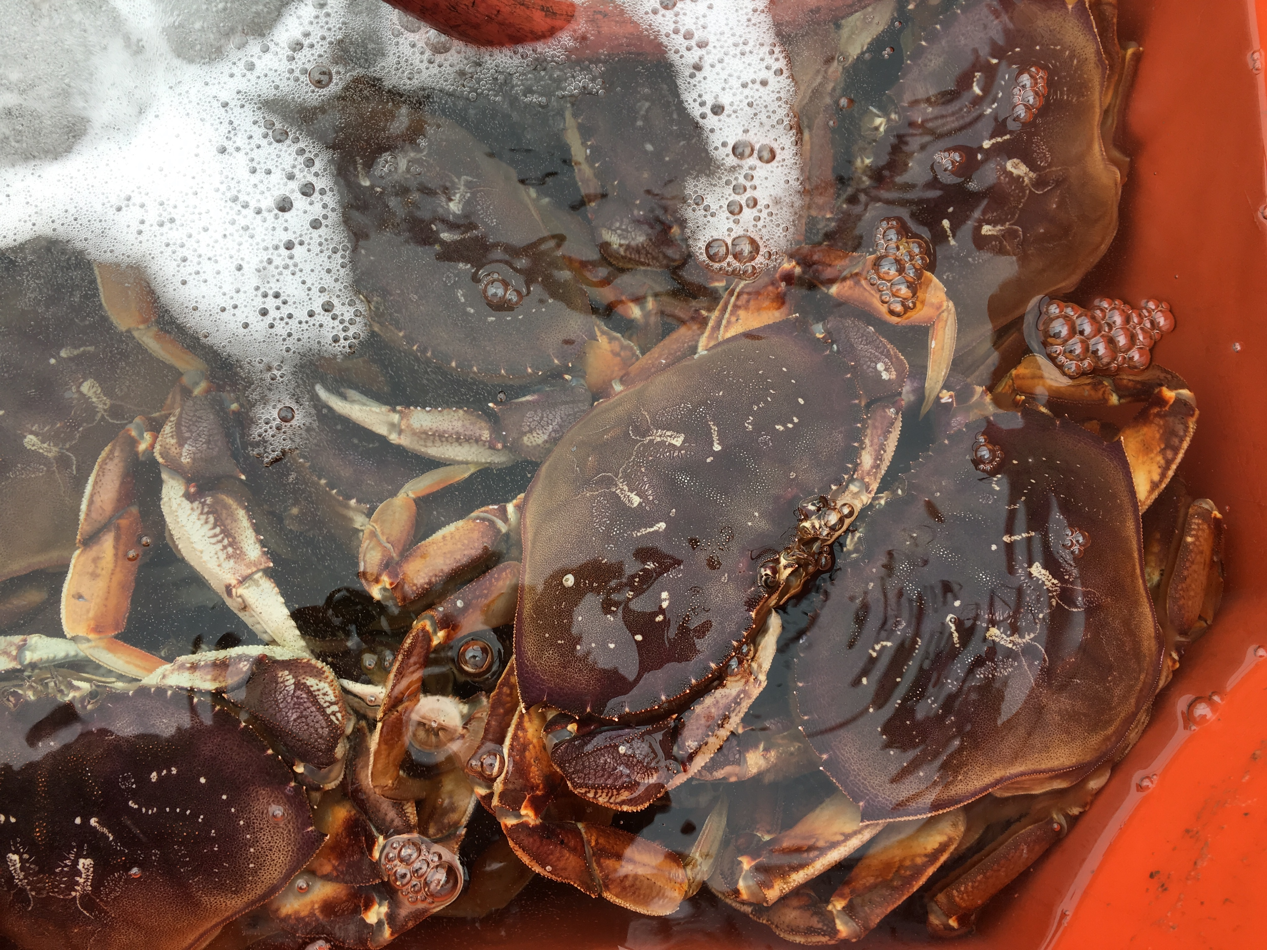Local fisherman takes advantage of being able to sell crab on Kodiak