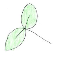 knaehoejkarse.dk: Nemme, plantebaserede opskrifter