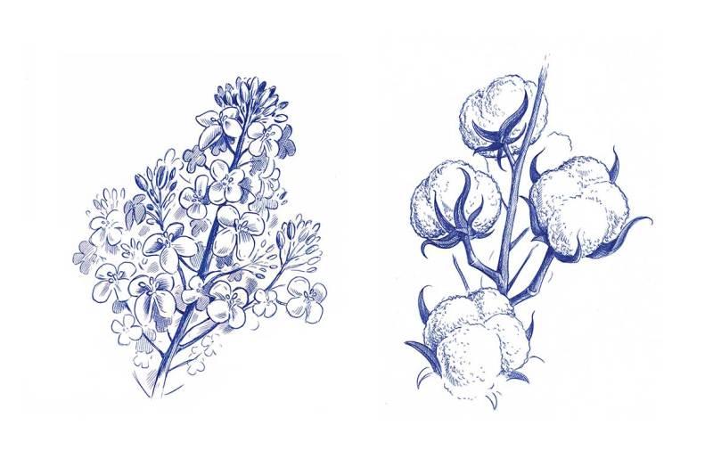 Zeichnungen-von-Pflanzen