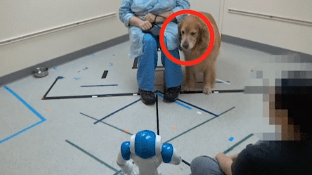 Good boys are happy to listen to social robots
