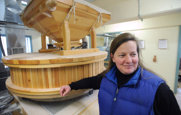 Rare heritage hard wheat sprouts in Maine