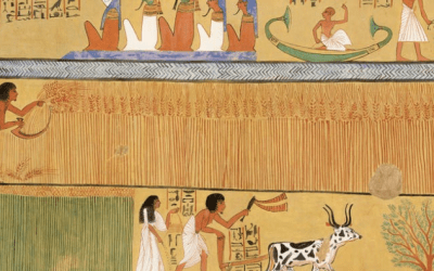 What 3,000-year-old Egyptian wheat tells us about the genetics of our daily bread