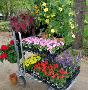 Cart of annuals
