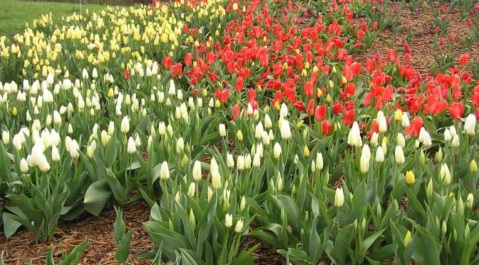 Spring blooming bulbs are here!