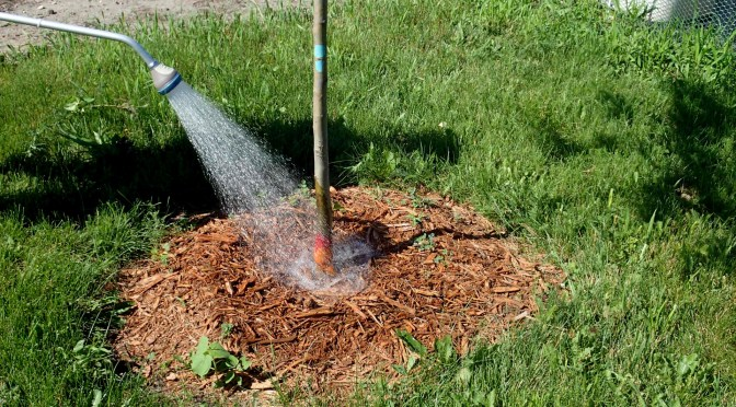 Watering Alert