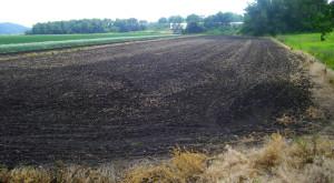 Good black soil