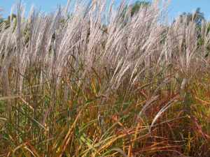 Don't Forget the Grasses!