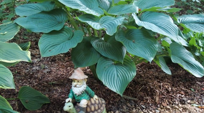 My Woodland Garden – The Large Hosta