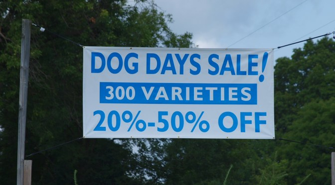 Dog Days Sale!!!