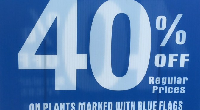 40% OFF Evergreen Trees Marked with Blue Flags!