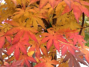 Fall is for planting and plant sales!