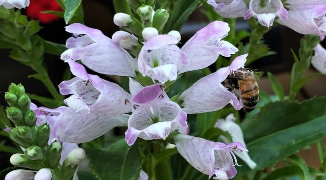 Flowers that Bees Stuff Themselves Into
