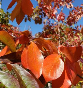 Best Trees for Fall Color