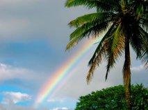 Rainbows & Palm Trees