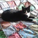 Fuzzy and the rag quilt
