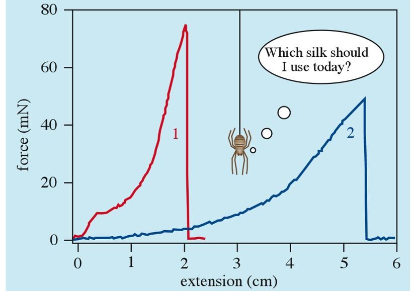 Is Spider Silk Stronger than Steel? – Knife Steel Nerds