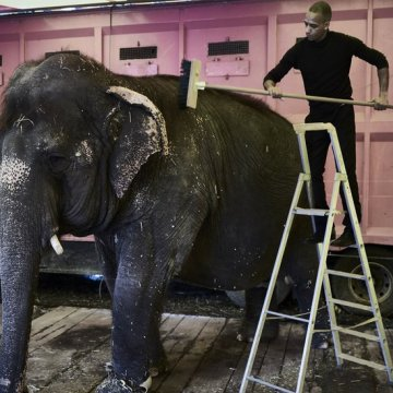 France announces 'gradual' ban on wild animals in circuses