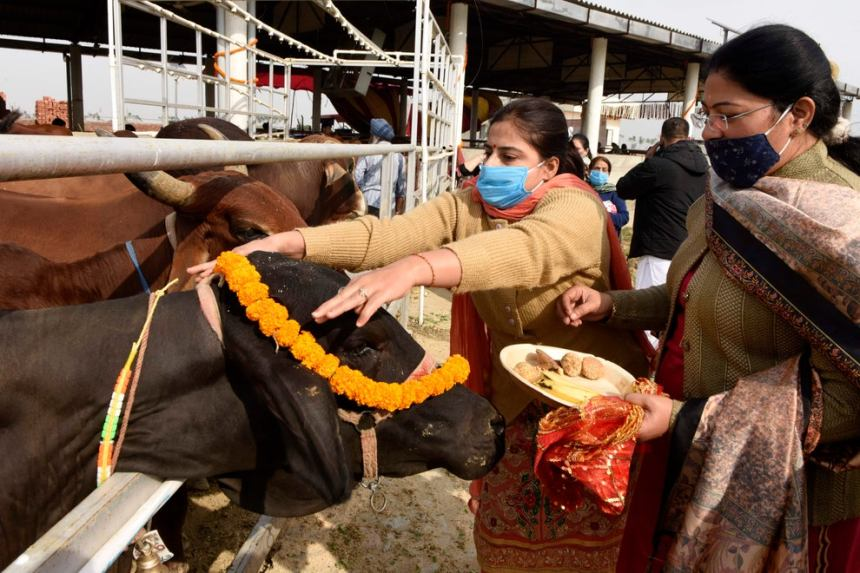 Indian minister says beef ban law is needed 'to protect cow vigilantes'