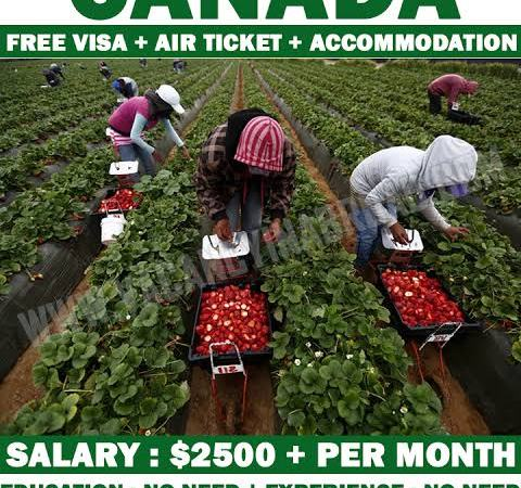 Apple farm workers needed in Canada Apply Now