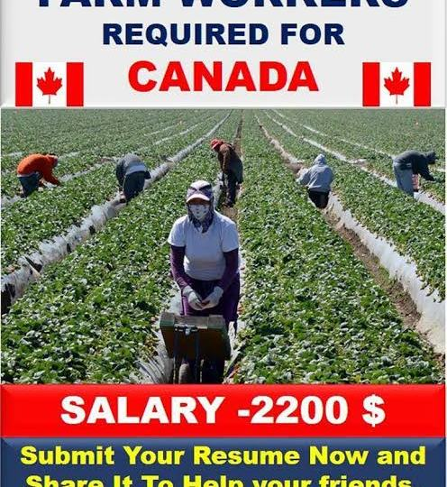 Apple pickers wanted in canada