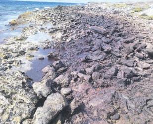 olie coral estate