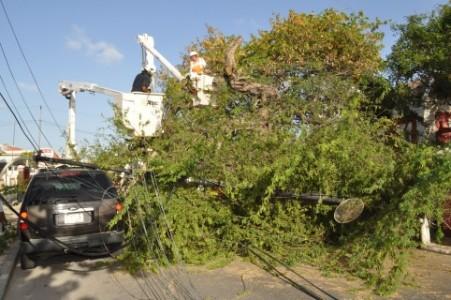 Omgevallen boom in Scharloo
