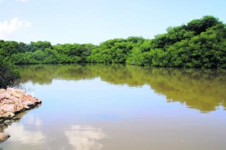 Mangrove park | Amigoe