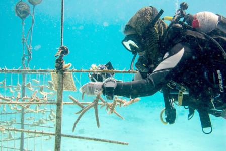 Bovenwinden krijgen nieuwe koraalriffen