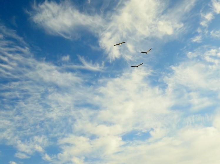 3:49 - pelicans