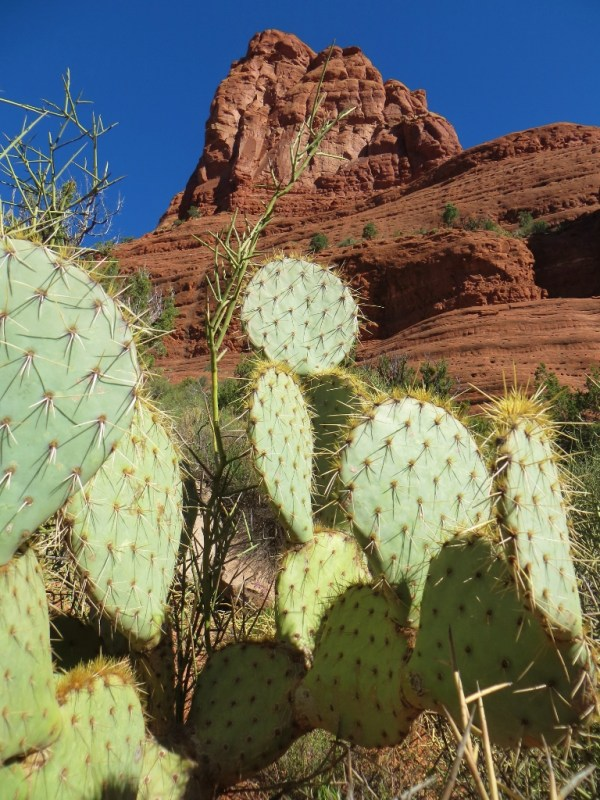 Red Rock w Green Cactus (768x1024)