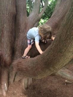 Logan museum tree