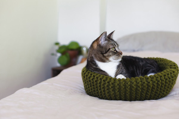 knit cat bed