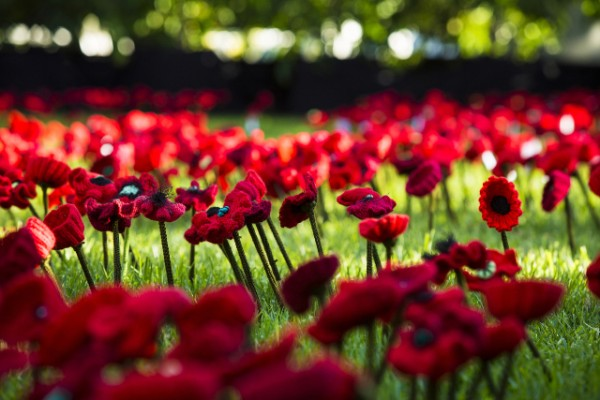 knit poppies wanted for war memorial