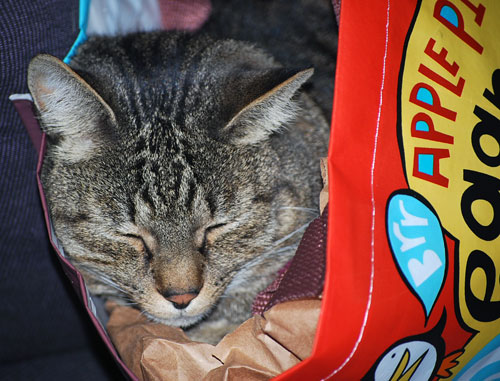 This bag is so comfy I tell ya, much better than those plastic bags!