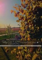 lilac tree-5