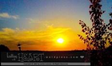 leafy sunset-2